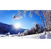 Snowy Winter Landscape Wallpapers  Sunlit Wallpaper