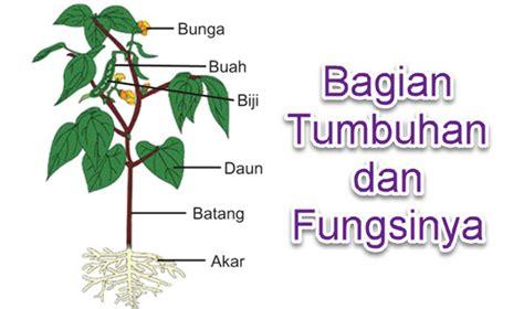 bagian bagian tumbuhan  fungsinya mikirbae