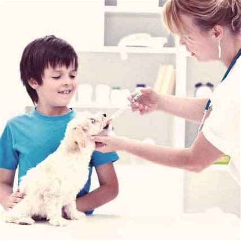 temaril dogs the causes and symptoms of lupus in dogs petcarerx