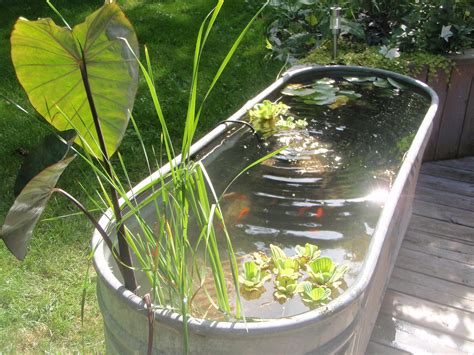turtle ponds for backyard above ground turtle ponds for backyards check out my