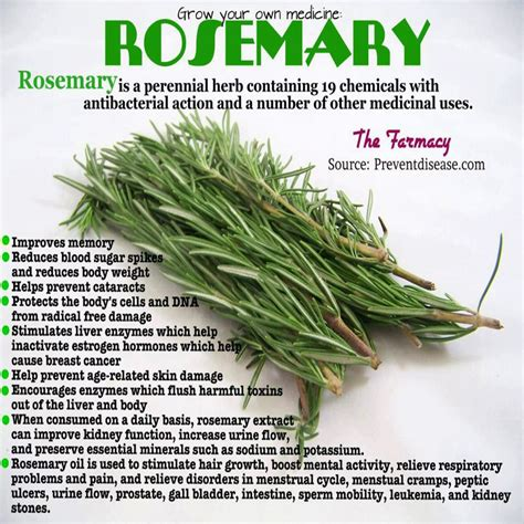 Medicinalcosmetic Uses Of Rosemary by Health Benefits Of Rosemary Herbtastic Herbal Tea