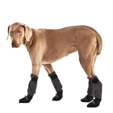 dog boat clothes weimaraner dog booties winter boots waterproof dog shoes