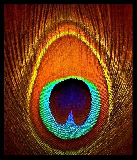 feather tattoo under eye 17 best images about peacock passion on pinterest