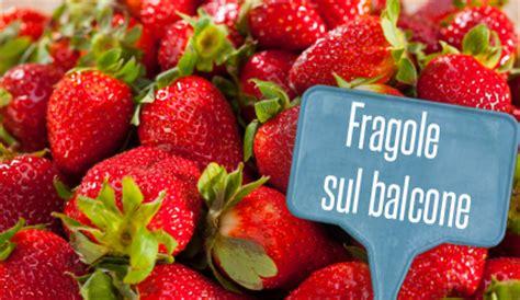 Coltivare Fragole Sul Balcone by Come Coltivare Le Fragole Sul Balcone Leitv