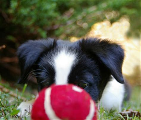 where can i play with puppies how can i teach my to play fetch