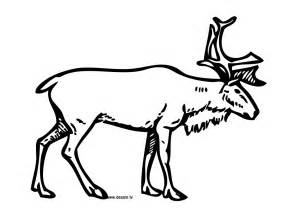 Coloring Reindeer sketch template