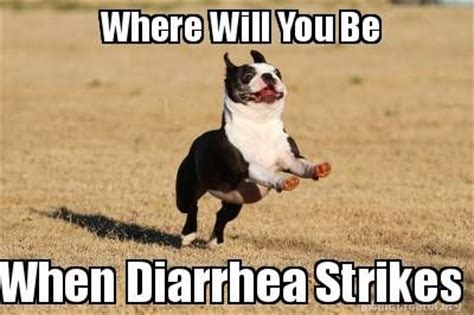 Diarrhea Meme - where will you be when diarrhea strikes dogs