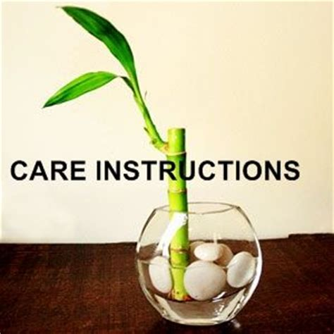 lucky bamboo plant care instructions gardening