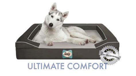 orthopedic dog bed orthopedic bolster dog bed unique max comfort has the most