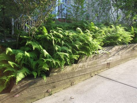 Landscape Timbers Slope Ferns And Landscape Timbers Edge A Sloped Driveway Falon