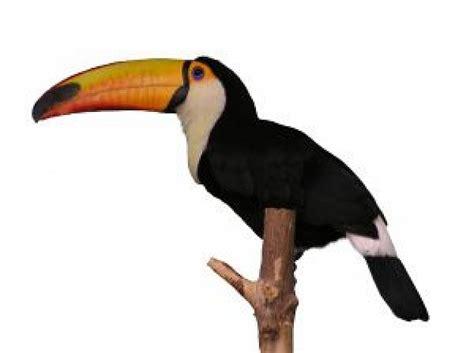 imagenes de aves sin fondo tuc 225 n descargar fotos gratis