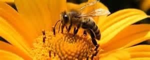 apiculture bio 3 apiculteurs engag 233 s nous parlent de la