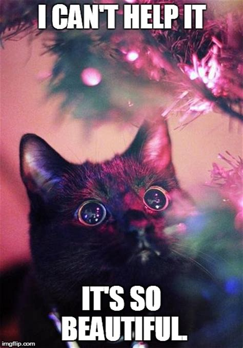 Christmas Cat Meme - christmas cat imgflip