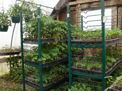 Tomato Racks by Tomato Plants