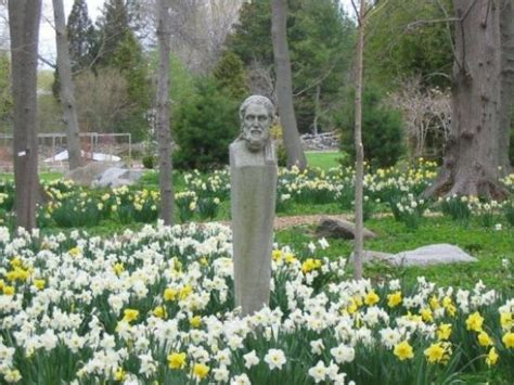 Blithewold Mansion Gardens Arboretum by Fields And Fields Of Daffodils Picture Of Blithewold