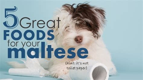 best puppy food for small dogs best food for maltese dogs 5 awesome choices for optimal nutrition herepup