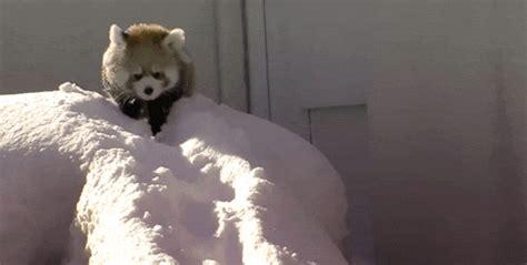 Zebe Piyama Panda Edition Size 12 an1851gif photo by newbeginnings2 animated gif 2281407 by galadriel on favim
