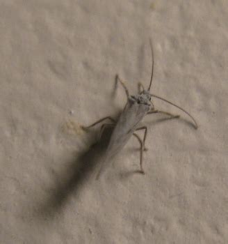 dauphin county bench warrants common bathroom bugs 28 images identification shaun8