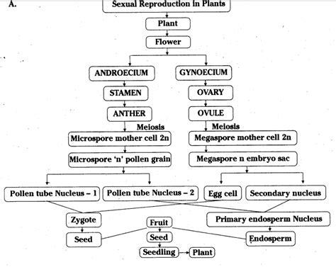explain flowchart prepare a flow chart to explain the process of sexual