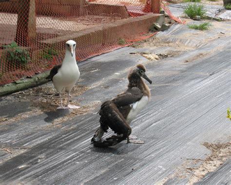 albatross   press