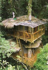 treehouse community world the roof and house on pinterest