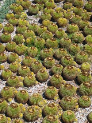 rotary botanical gardens hort blog: savor spheres in the