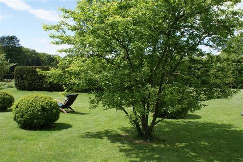 grosse pflanzentöpfe richtig gro 223 e pflanzen zinsser gartengestaltung