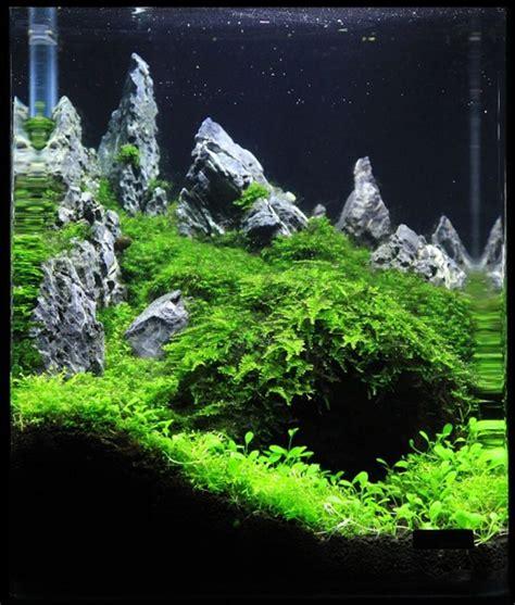 Shrimp Tank Aquascape by 78 Best Images About Aquascaping Nano Aquariums On