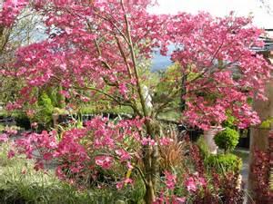 shade flowering trees