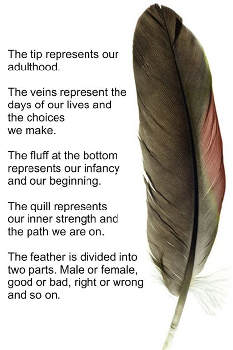 Painted Feathers By Sharon Girdwood Feathers Meanings
