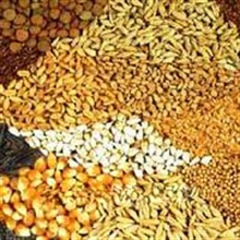 cattle feed in uttar pradesh manufacturers and suppliers