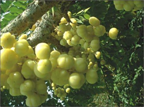 fruit exles fruit