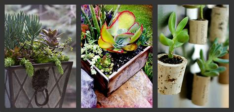 Outdoor Plants That Don T Need Sunlight by Planting Succulents Container Garden Ideas 171 Bombay Outdoors