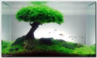 """Aquascape of the Month: September 2008 """"Pinheiro Manso""""   AquaScaping"""