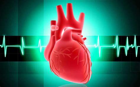 bagaimana anatomi   kerja fisiologi jantung