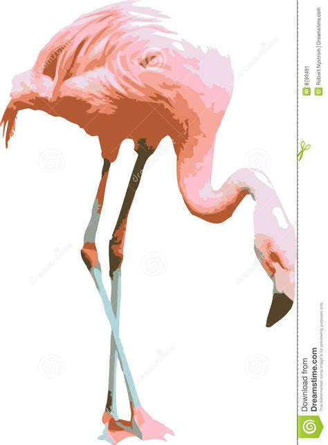 clip stock vector illustration of a pink flamingo stock image image