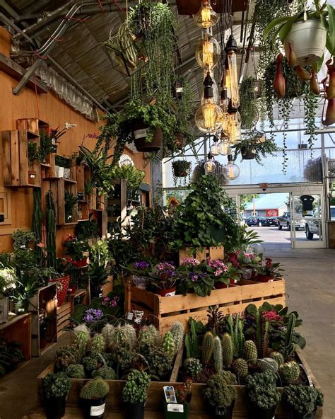 houseplant display retail garden center garden center
