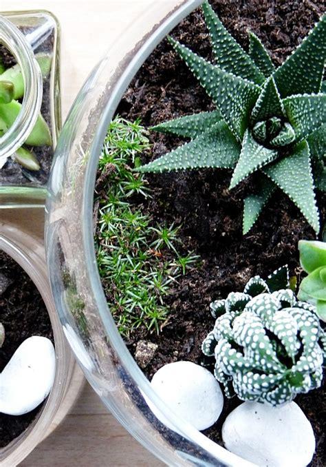 Mini Terrarium Selber Bauen by Mini Terrarium Selber Bauen Terrarium Mysterious