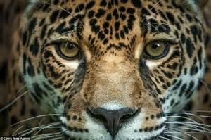Who Makes Jaguars Jacksonville Jaguars New Signing Makes