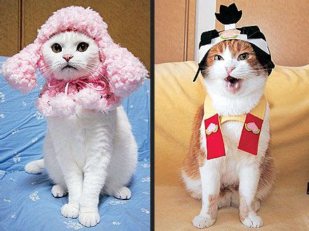 Dress Baby Kucing 17 best images about cats in clothes on cats