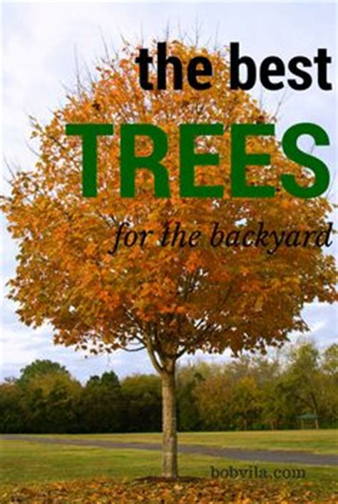 good trees for small backyards 1000 ideas about privacy trees on pinterest thuja green giant arborvitae tree and