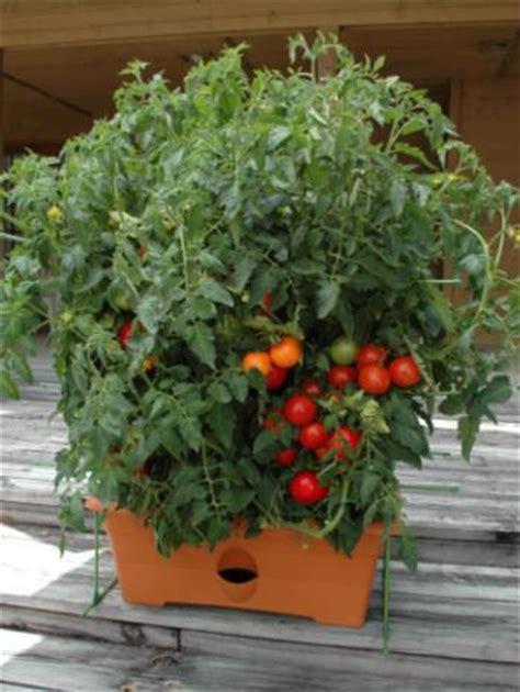 container gardening the creative vegetable gardener