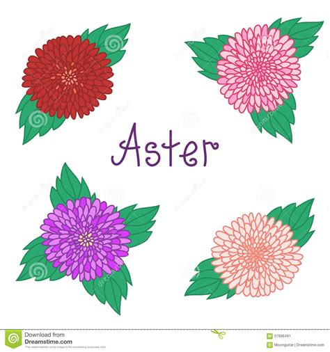Set Kulot Aster Pink Atasan Pink 1 aster set colorful flowers collection of stock vector illustration 57696491