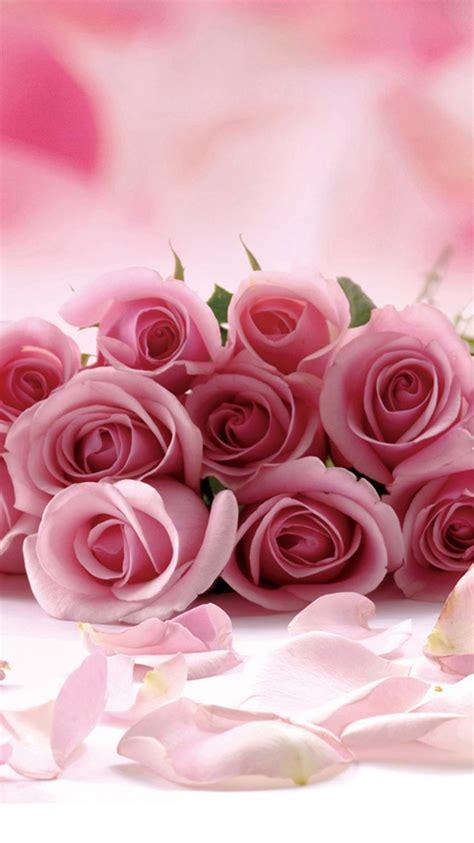 pink roses iphone 6 plus hd wallpaper iphone wallpapers pink rose flower iphone 6 plus hd wallpaper iphone