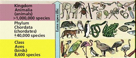 definition of animal biology biological diversity i