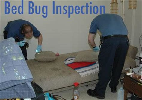 bed bug inspection bed bug treatment options