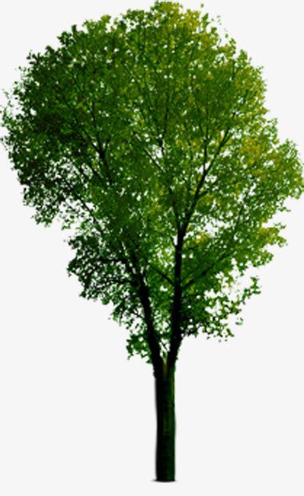 Barren Tree Clip Clipart Vector Design