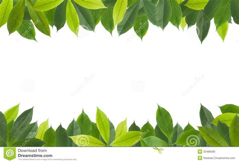 wallpaper green leaves on white background green leaf white background wallpaper theleaf co
