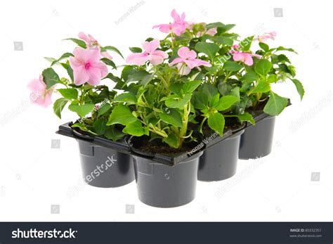 plastic plants for the garden black plastic tray with pink busy lizzy plants for the