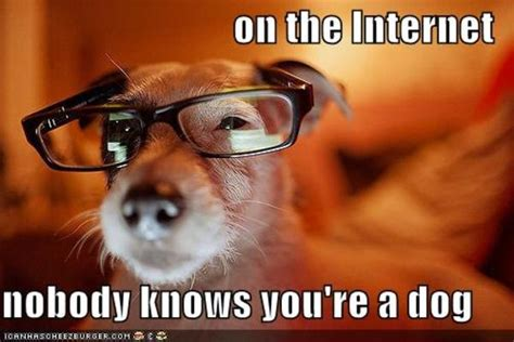Internet Dog Meme - image 428231 on the internet nobody knows you re a